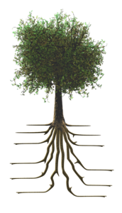 tree_with_roots_10083